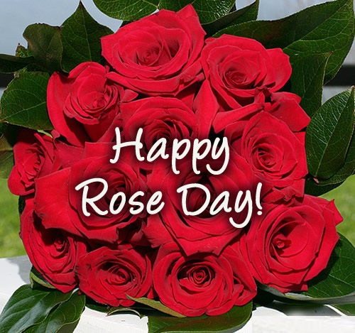 Happy Rose Day Images Photos Pictures Pics Hd Wallpapers Free Download -2491